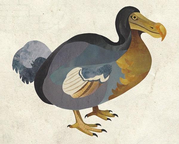 Jonathan-Woodward-Dodo