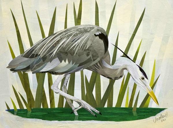 Jonathan-Woodward-Grey-Heron