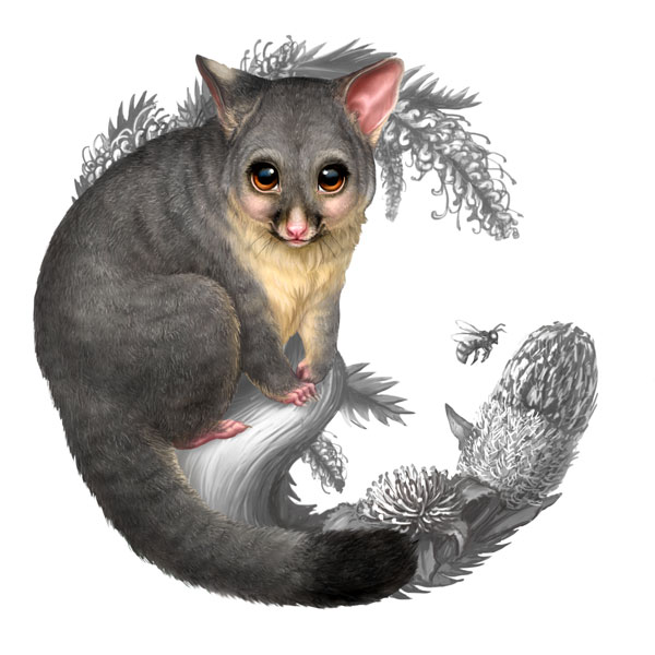 Bush-Babies-II-Possum-Coin-Artwork