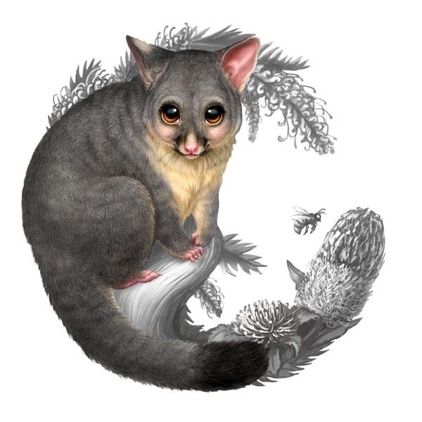 Possum Illustration Bush babies ii possum coin