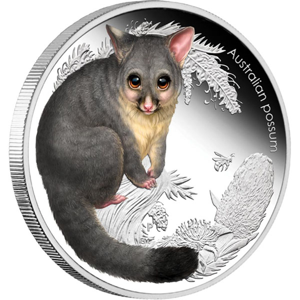 Bush-Babies-II-Possum-Rev