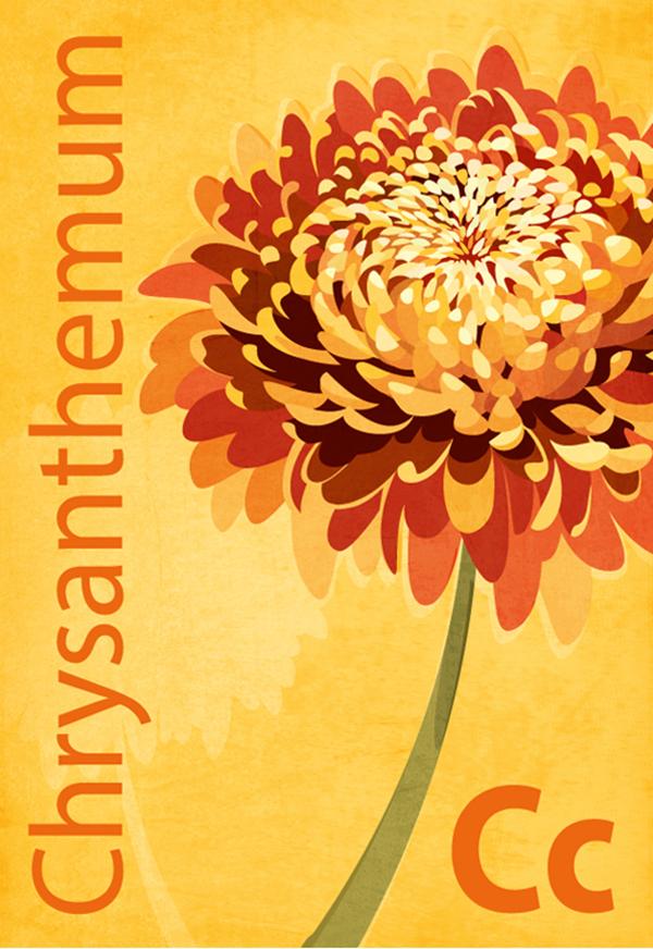chrysanthemumhai