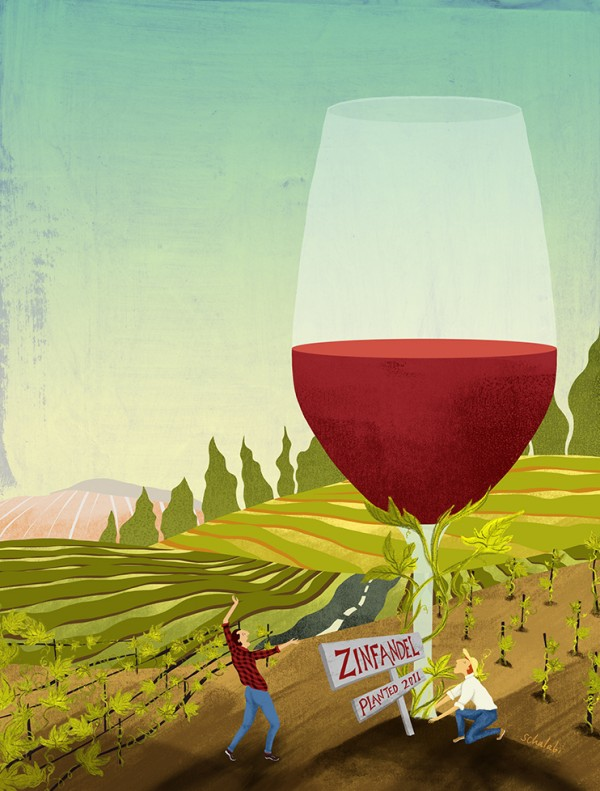 Can Young Vines Grow Great Zin?