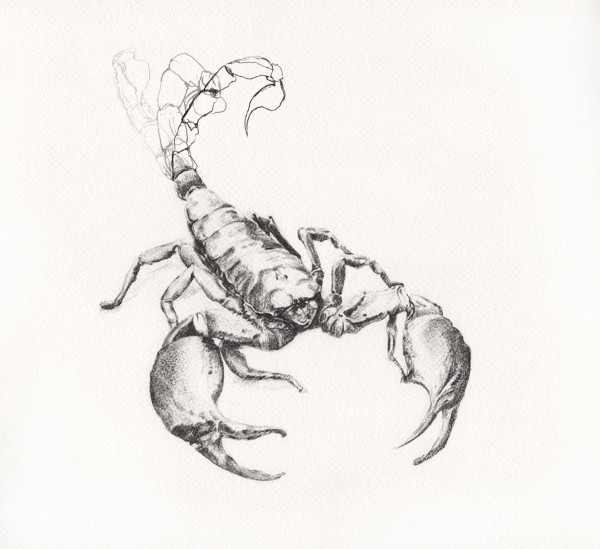 Scorpio-HAI