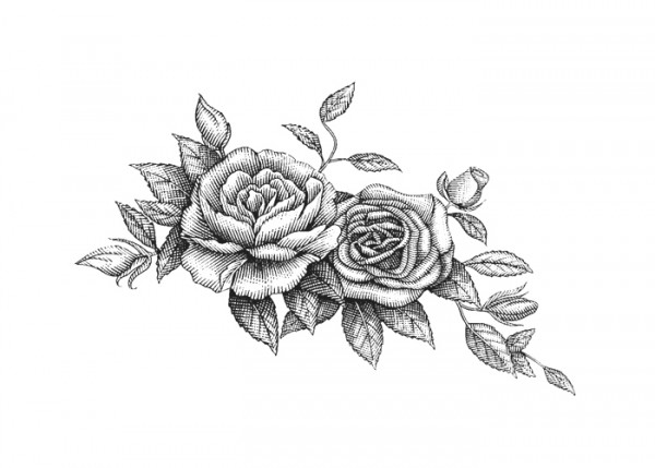 Line Drawing Rose Tattoo : Williams sonoma packaging illustrated by steven noble