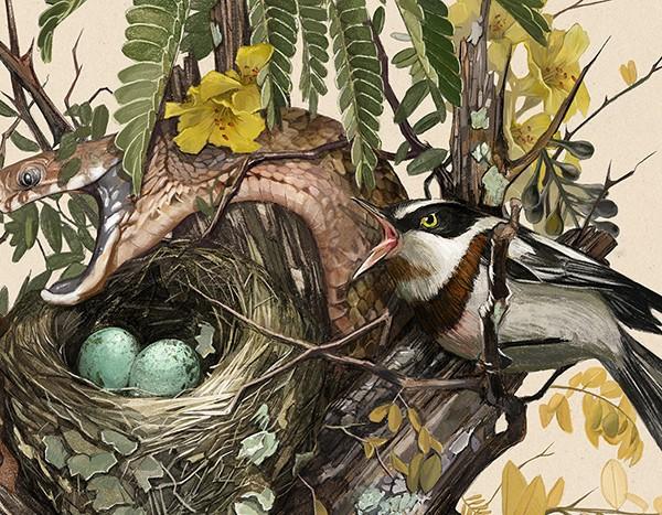 hai-Caroline-Vos-Illustration-Snake-in-nest-crop-1