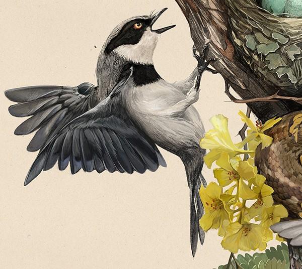 hai-Caroline-Vos-Illustration-Snake-in-nest-crop-2
