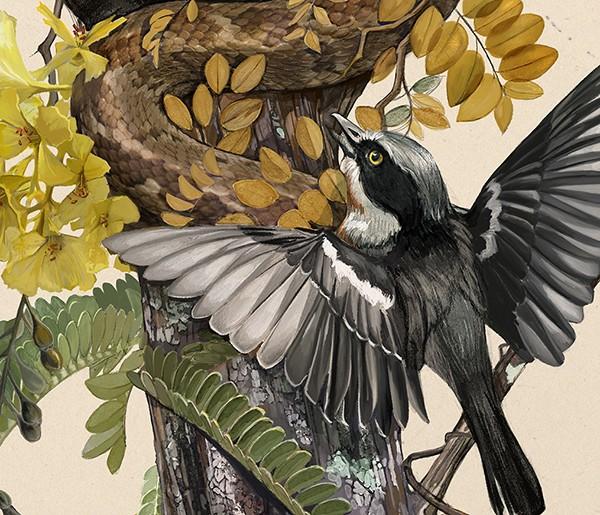 hai-Caroline-Vos-Illustration-Snake-in-nest-crop-3