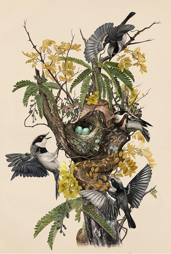 hai-Caroline-Vos-Illustration-Snake-in-nest-final